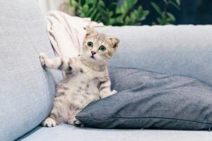 枕の性能に驚く